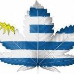 Cannabis.-In-Uruguay-si-acquista-in-farmacia-per-uso-ricreativo